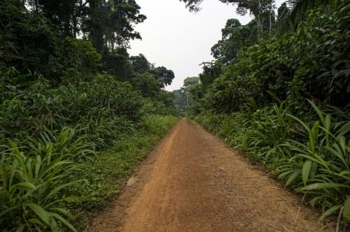 View on the way back to Lukolela, Democratic Republic of Congo.
