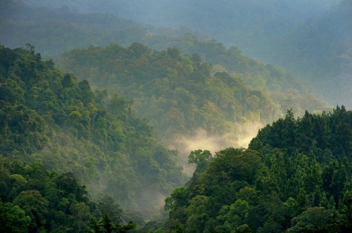 Forests in Gede Pangrango, West Java, Indonesia. New research indicates that the amount of carbon absorption may not be rising due to climate change, as is commonly believed.