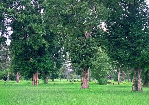 """""""Sabemos que los agrobosques pueden ser muy diversos, pero no conocemos realmente la dinámica de los vínculos entre los campos agrícolas y los ecosistemas naturales"""", dijo Manuel Guariguata, científico principal del Centro para la Investigación Forestal Internacional. CIFOR/Autan"""