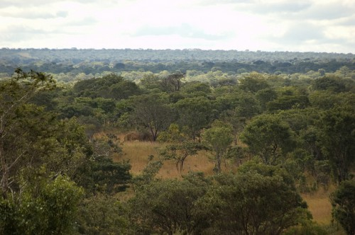 The Miombo woodlands in northern Zambia are the site of a number of large-scale biofuel investments, Zambia. Photo by Jeff Walker for Center for International Forestry Research (CIFOR)