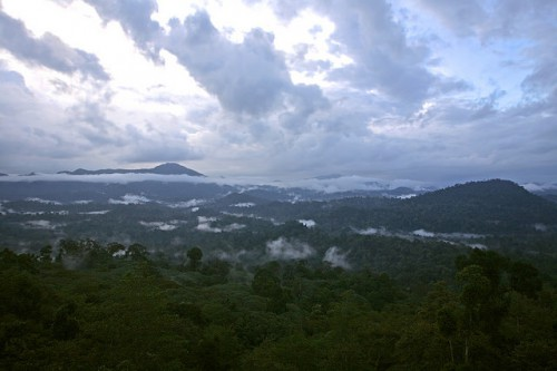 Danum Valley, Kalimantan, Indonesia. Puntos de divergencia y convergencia comienzan a cristalizarse en las negociaciones en curso sobre el clima. Fotografía de CIFOR.
