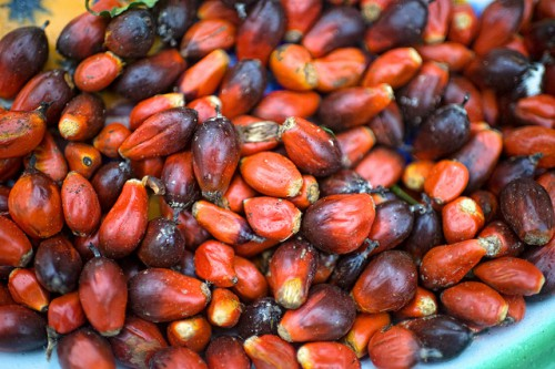 Palm Nuts in the village of Minwoho, Lekié, Center Region, Cameroon. Olliver Girard/CIFOR photo