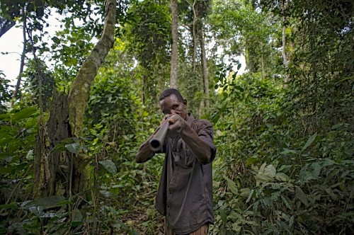 Un chasseur dans la Réserve de Tumba-Lediima, République démocratique du Congo. La chasse de viande de brousse ne cessera pas à moins que les populations locales sont offerts une alternative, un expert du CIFOR dit. Ollivier Girard/CIFOR photo
