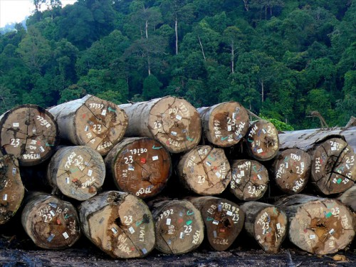 Timber certification is one mechanism for ensuring sustainable forest management. Here are certified timber in a log pond in PT. Sumalindo Lestari Jaya 2, West Kutai district, East Kalimantan, Indonesia.   Photo by Michael Padmanaba for Center for International Forestry Research (CIFOR).