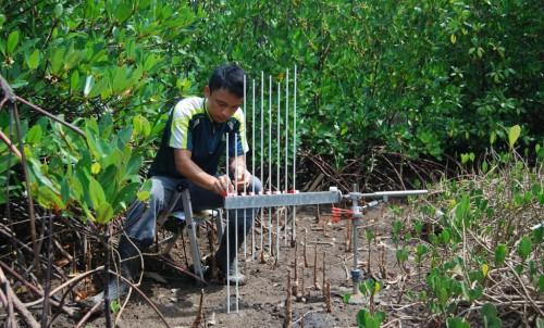 Tabel Ketinggian Permukaan Batang (rSETs) memantau perubahan ketinggian permukaan untuk lebih memahami peran mangrove menghadapi kenaikan permukaan laut. Hanggar Prasetyo/Foto Universitas Udayana