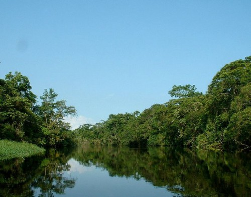 Hutan dekat pantai Atlantik di Brasil. Upaya negara tersebut merestorasi hutan Atlantik telah berhasil didorong oleh keterlibatan pemangku kepentingan dan perimbangan keseluruhan penggunaan lahan, tidak semata konservasi. Robertcurtin/Foto Flickr