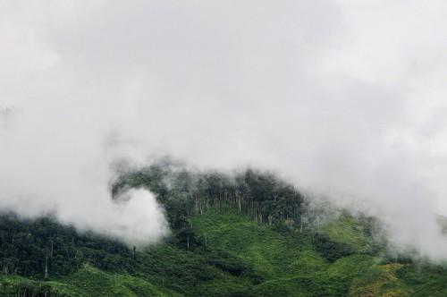Nubes invaden un bosque de montaña cerca de Caranavi, Bolivia. El futuro de los bosques del país se avizora igualmente difícil de continuar las tendencias agrícolas actuales. Fotografía de Neil Palmer / CIAT.