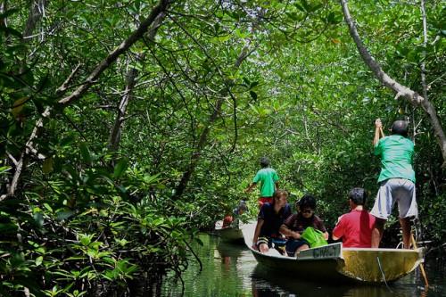 Hutan mangrove di Nusa Lembongan, Indonesia. Upaya restorasi mangrove di Asia Tenggara menghadapi perluasan akuakultur pesisir. Foto: Leony Aurora/ CIFOR