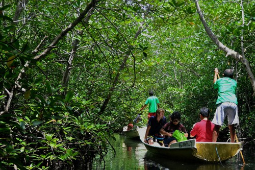 Bosques de manglares en Nusa Lembongan, Indonesia. Los esfuerzos de restauración de manglares en todo el sudeste de Asia se enfrentan a los esfuerzos por expandir las granjas de acuicultura costeras. Fotografía de CIFOR.