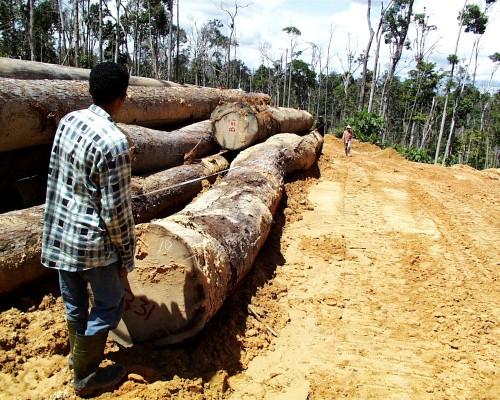 Seorang pekerja memilih kayu di Indonesia. Memverifikasi legalitas kayu akan tetap menjadi tantangan, menurut salah seorang pakar. Agung Prasetyo/foto CIFOR