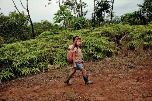 Pobladores quechuas cruzan un puente sobre el río Jondachi en la Amazonia ecuatoriana para vender su cosecha. Cada vez más, los indígenas amazónicos ven sus medios de vida puestos a prueba por la globalización y el cambio climático. Fotografía de Tomas Munita / CIFOR.