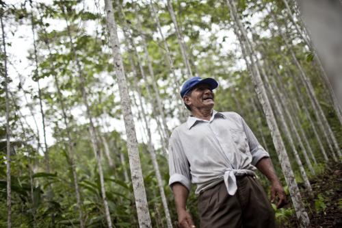 Don Segundo Saboya junto a las bolainas de su purma. Foto Ernesto Benavides / CIFOR