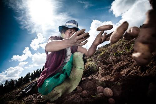 Una mujer recoge papas en Huancayo, Perú. Poco a poco, el calentamiento global ha obligado a los agricultores andinos a sembrar sus cultivos a mayores alturas. Fotografía: Elmer Ayala.