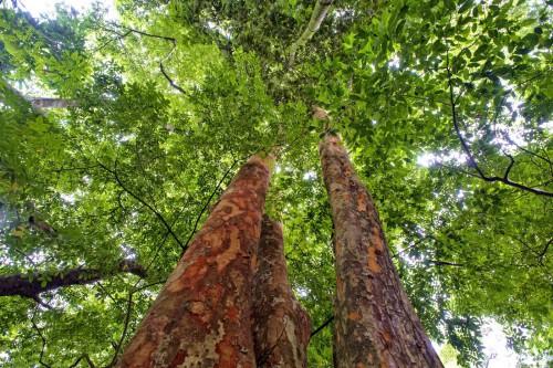 Trees in Kisangani, Democratic Republic of Congo. Ollivier Girard/CIFOR photo