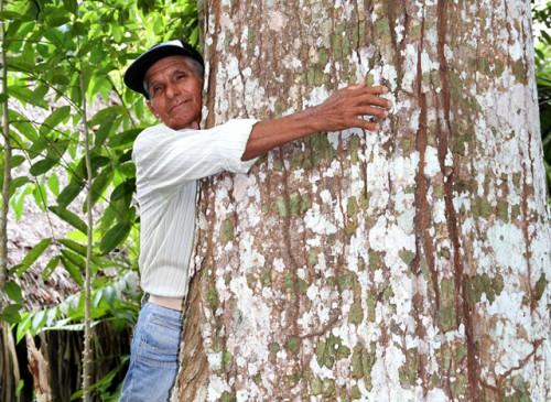 Don Lirio Rodriguez en su parcela de Contamana, donde cuida especies explotadas de árboles amazónicos.