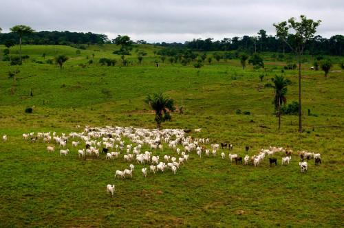 Paisaje cerca de Rio Branco, Acre, Brasil. La ganadería es uno de los mayores causantes de la deforestación en este país. Fotografía: Kate Evans/CIFOR