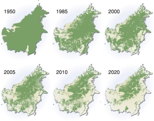 borneo, deforestation, borneo deforestation map, malaysia, indonesia, logging, palm oil, oil palm