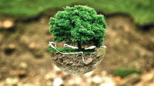 Nuevo estudio global calcula que los bosques tropicales del mundo pueden albergar entre 40,000 y 50,000 especies arbóreas, algunas muy poco conocidas. Foto: Pixabay.