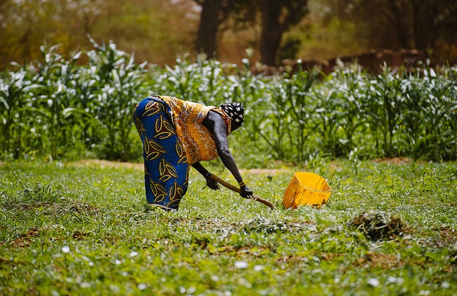 Gardening around Lake Bam, Burkina Faso