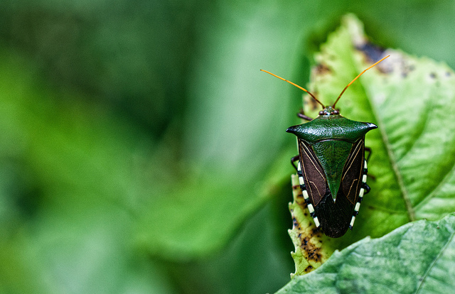 insect decline, biodiversity, food, biodiversity loss, sustainable food systems