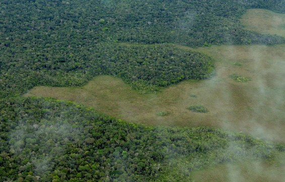 Amazon, deforestation, brazil