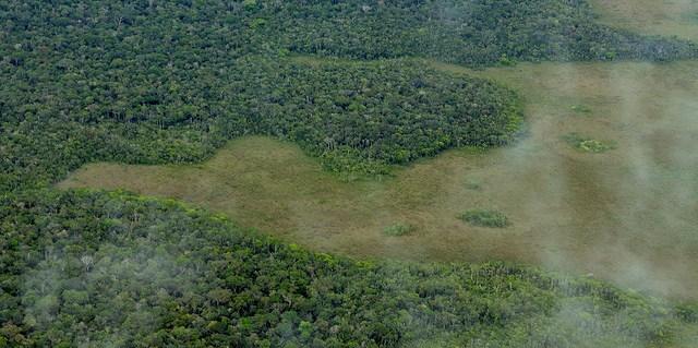 Amazon, deforestation, brazil