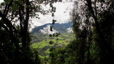 ¿Están los países andino-tropicales listos para la restauración de sus bosques andinos?