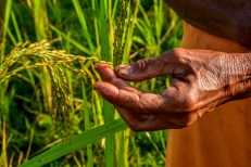Permalink to: Forests vital for global food security
