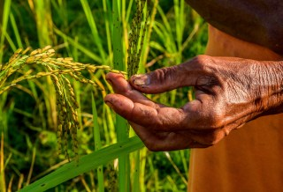 Forests vital for global food security