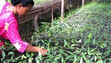 Planting the seeds for REDD+ payments in Indonesia