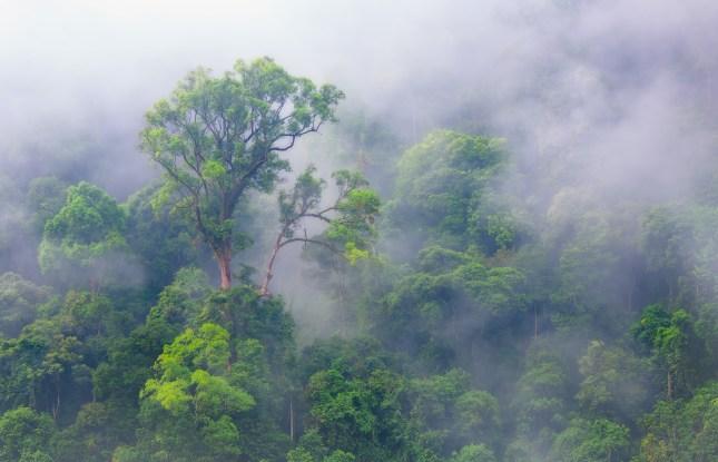 El rol de los árboles como productores de lluvia