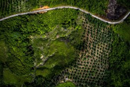 Aerial views of paddy field and oil palm plantations in Kutai Kertanegara district, East Kalimantan, in Indonesian Borneo. Balancing development and conservation is a key concern for sustainable oil palm landscapes.