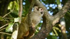Los desafíos de Colombia para recuperar su biodiversidad con restauración ecológica
