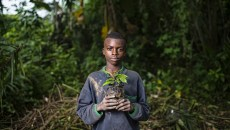 10 years on, tenure remains a challenge for REDD+