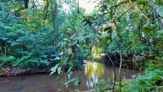 ¿Cuánto sabe de materia forestal? ¡Resuelva el Quiz por el Día Internacional de los Bosques!