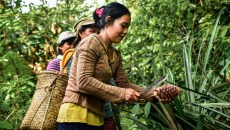 In REDD+ villages, women say their wellbeing has declined