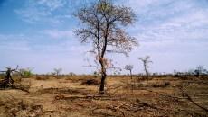 Degradación de la tierra pone en riesgo el bienestar de más de 3 mil millones de personas