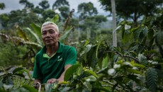 Why social forestry: Keeping the coffee