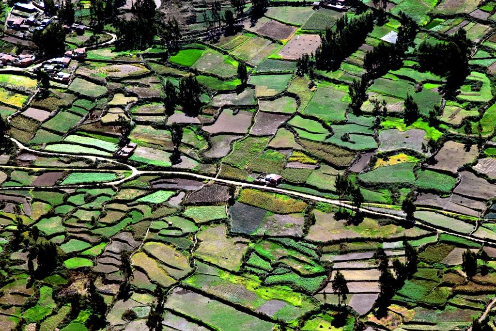 Cinco beneficios al acortar la brecha entre la política y la ciencia sobre servicios ecosistémicos