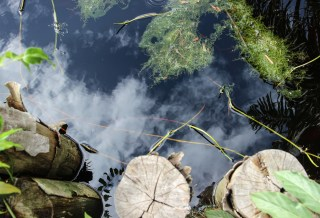 How far has Indonesia come on peatland conservation and restoration?