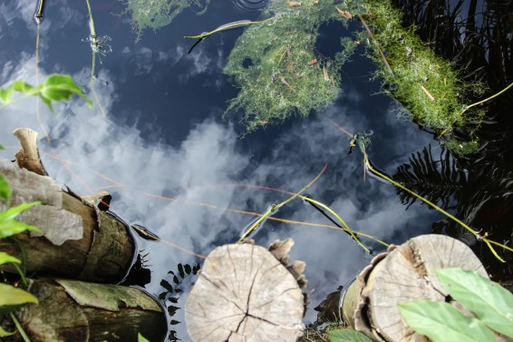 peatlands, methane, borneo