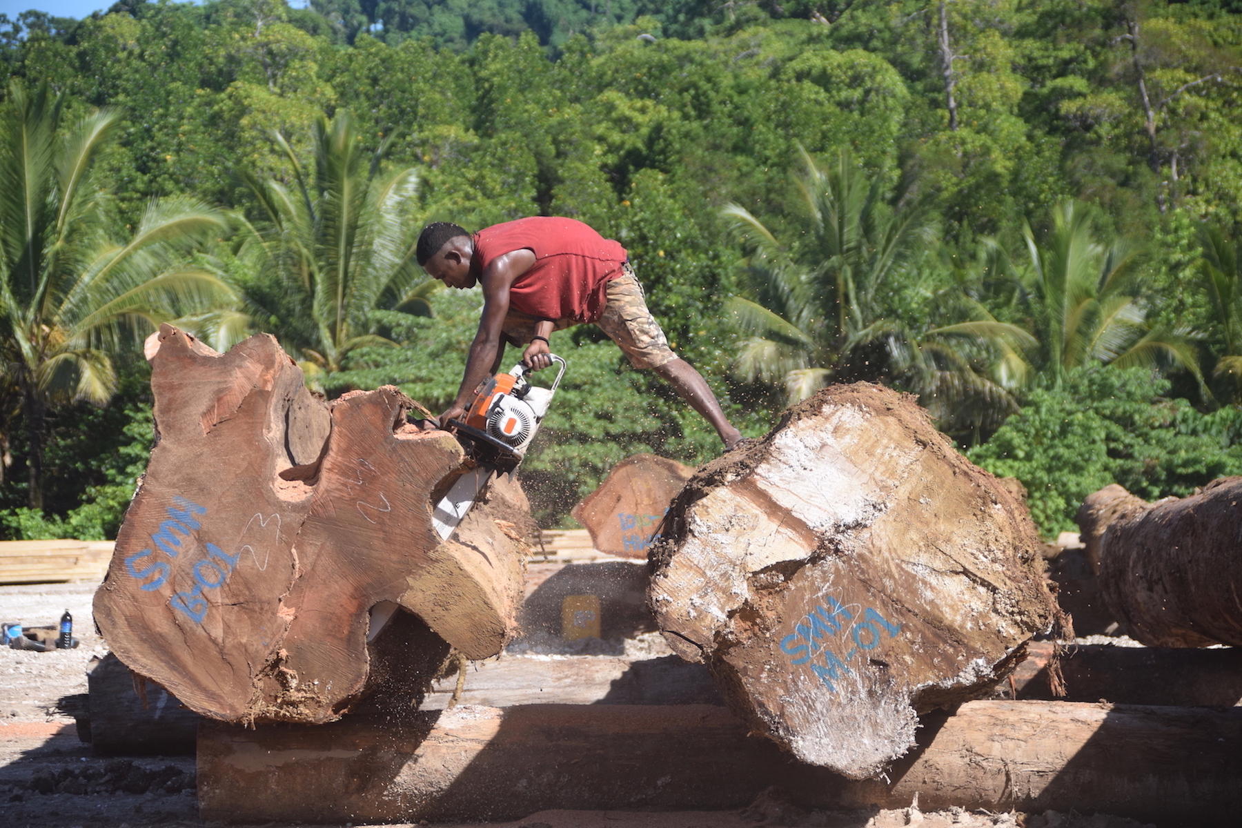 In Solomon Islands, the gendered effects of corporate logging
