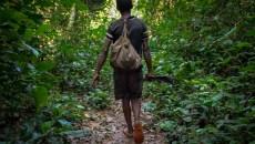 Que peuvent nous dire les chasseurs sur la perte d'espèces sauvages ?