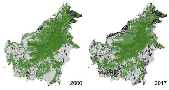 Borneo, deforestation, palm oil, oil palm indonesia, malaysia, kalimantan, price palm oil