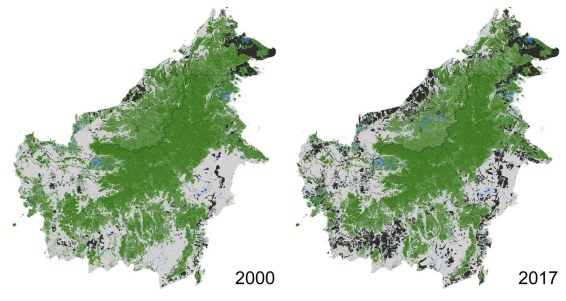 Borneo, deforestation, palm oil, oil palm indonesia, malaysia, kalimantan, price palm oil