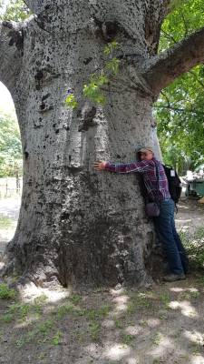 Rober Nasi, DG of CIFOR, hugs a baobab tree, valentine's day