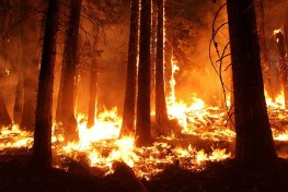 fire, wildfire, bush fire, bushfire, wild fire, forest fire