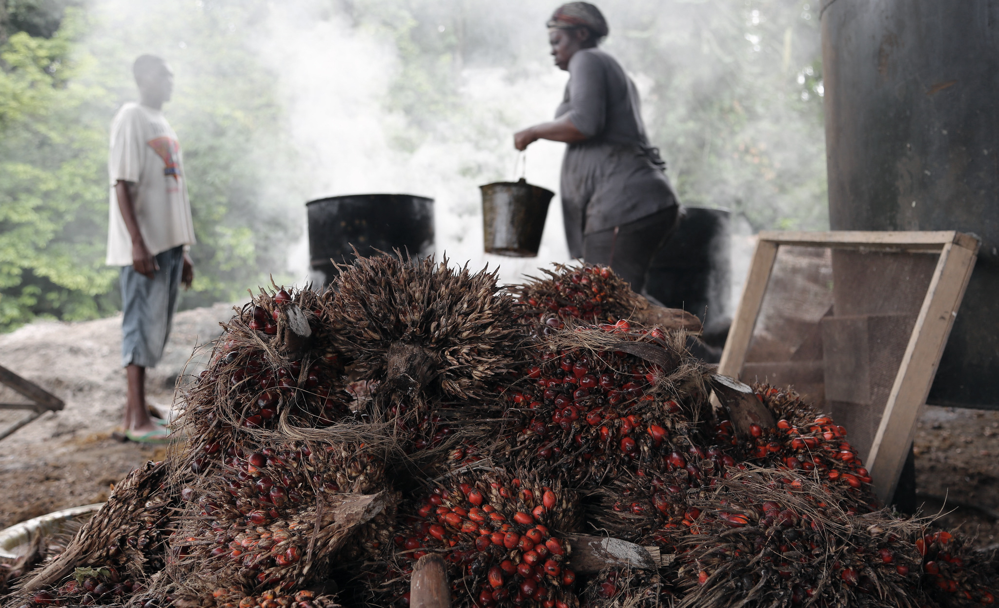 Image result for congo basin palm oil