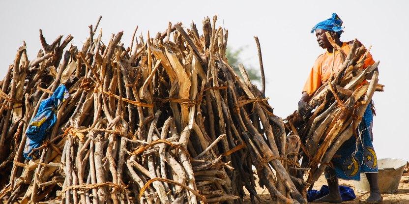 firewood, rural poor, deforestation, REDD+, PES, logging, deforestation, conservation