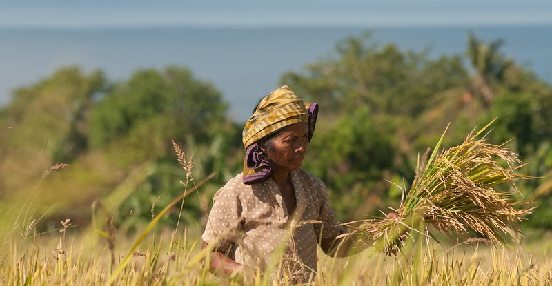 A woman stands in a field with a handful of rice paddy
